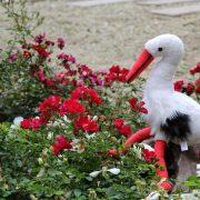 Cigogne et roses