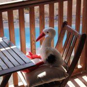 Balcon piscine cigogne